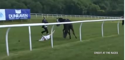 Журналистка остановила коня впрямом эфире