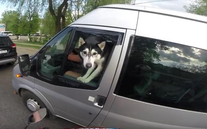 Собака за рулем вызвала умиление у брянцев