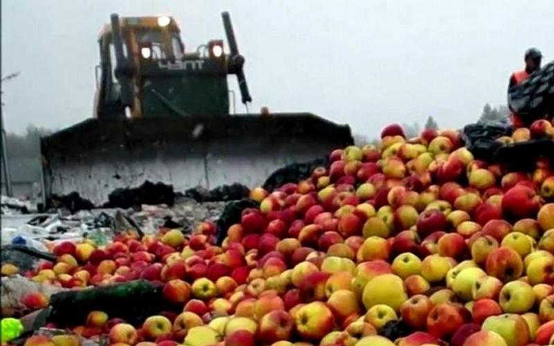 Под Новозыбковом раздавили 34 тонны спелых яблок