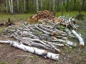 За 16 лет нарубил леса на 23 миллиона рублей