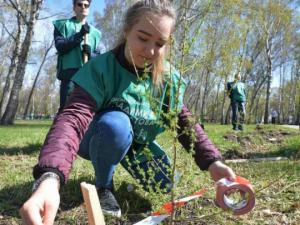Две аллеи даурских лиственниц появилось в Челябинске