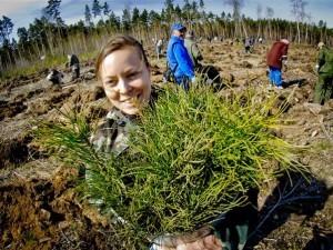 16 тысяч сосен посадили в Челябинском городском бору