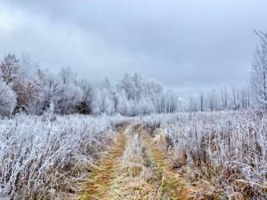 Резкое похолодание, заморозки и дожди пообещали на выходные в Челябинской области