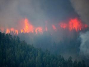 Общественники доказали занижение статистики по лесным пожарам