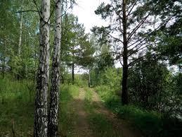Руководитель особо охраняемых территорий обманом захватил лес