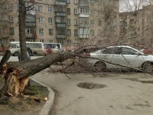 Упавшим деревом накрыло иномарку