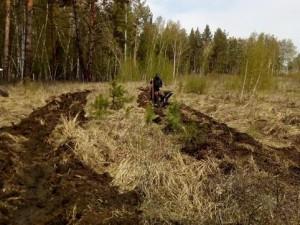 Дубовую рощу восстановят в Брединском районе