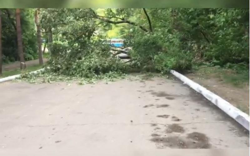 Возле бизнес-центра вБрянске рухнуло дерево