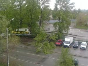 Тополя в Челябинске падают от сильного ветра