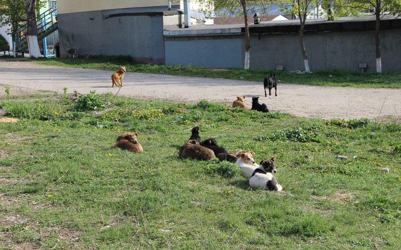 Жители Суземки пожаловались прокурору набродячих кошек исобак
