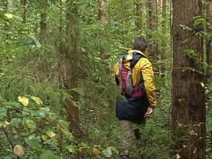 Пропавшего в лесу искали на квадроциклах