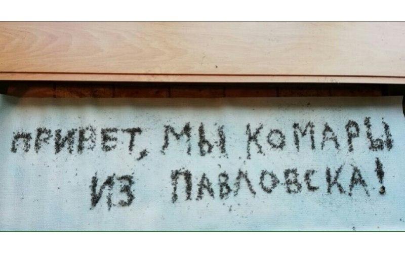 Воронежцы выложили измертвых комаров длинную надпись