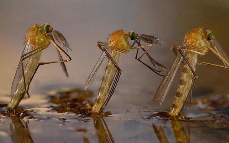 В заповеднике «Брянский лес» отмечают небывалое нашествие комаров