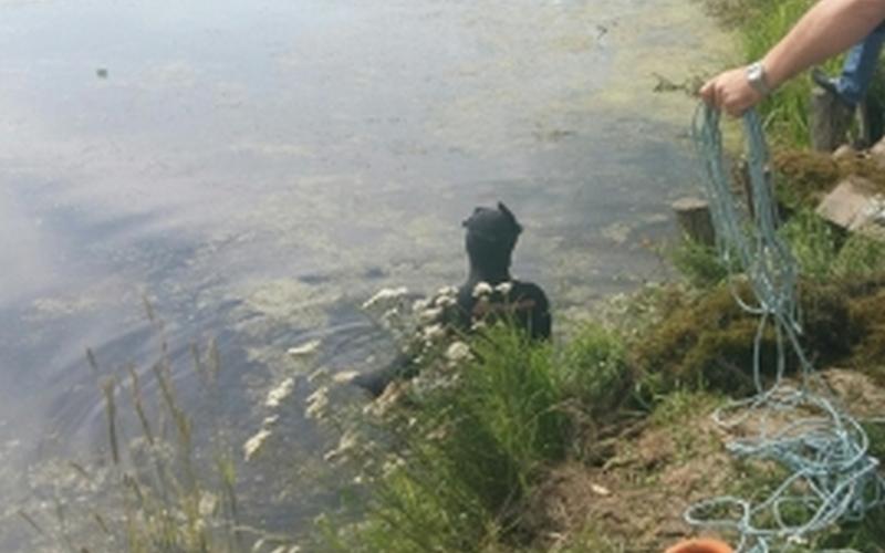 ИзБолвы близ Любохны спасатели достали тело женщины