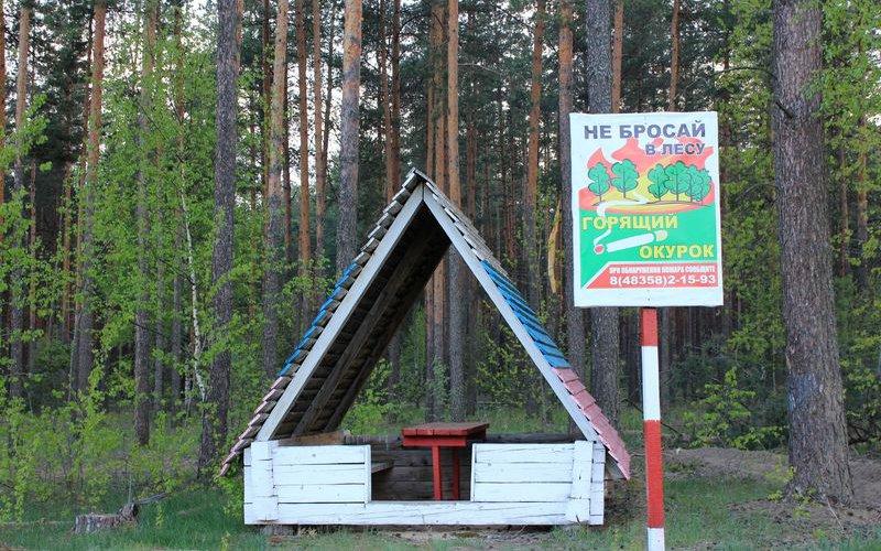 Злынковский лес украсили противопожарной агитацией