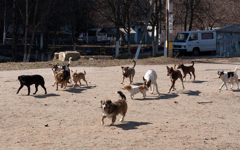 Всоцсетях выложили пугающее видео остае бродячих собак вБрянске