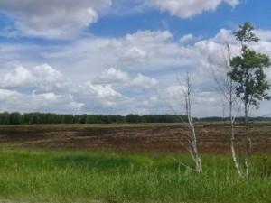 Деньги вместо земельного участка смогут получить многодетные семьи Челябинской области
