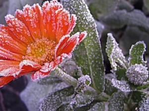 Такое зимнее южноуральское лето: ночью наблюдали заморозки