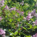 Лето в Челябинске продлится на месяц? Народная примета