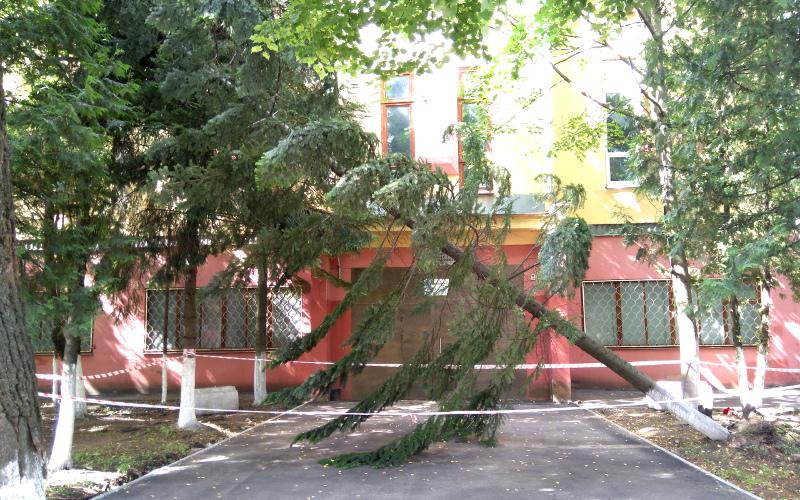 Брянским коммунальщикам поставили на вид рухнувшую в центре города ель