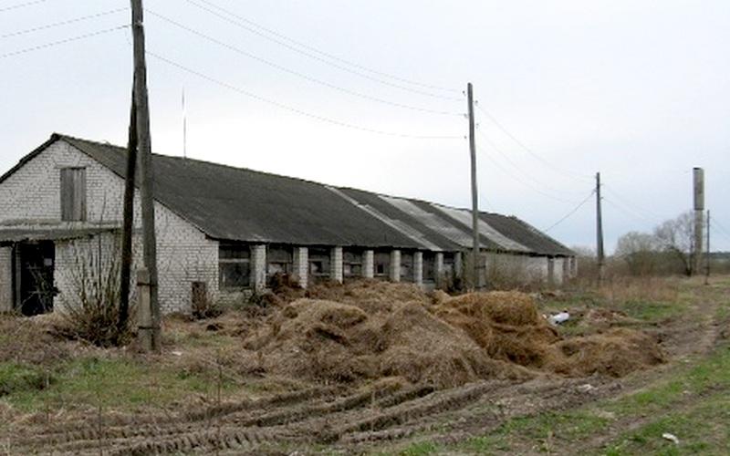 Выгоничская ферма погрязла в антисанитарии