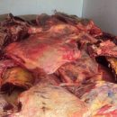 Под Клинцами задержали тонны подозрительной говядины