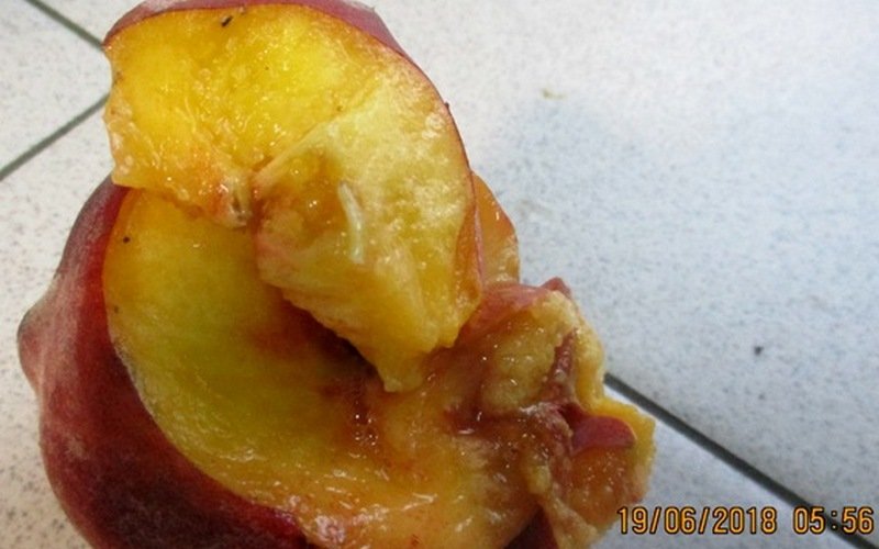 На Брянщине задержали турецкие персики с личинками
