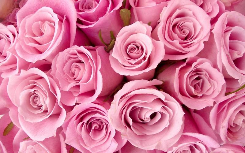 500 украинских роз задержали в Брянской области