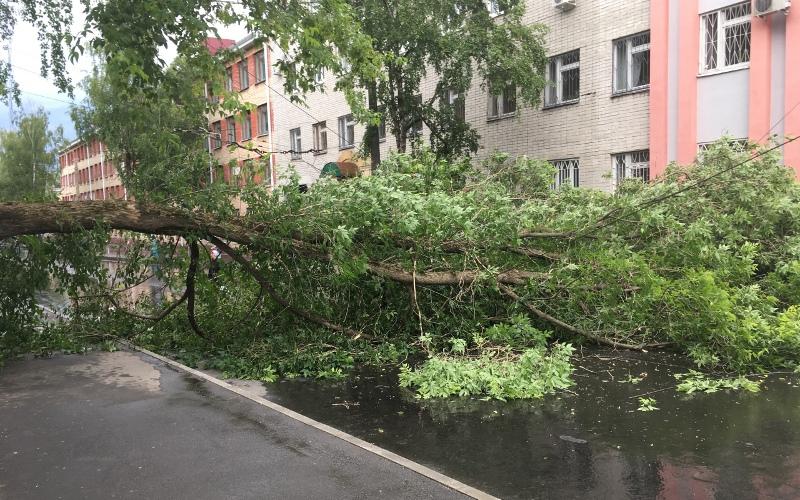 Возле строительного техникума вБрянске надорогу упало дерево