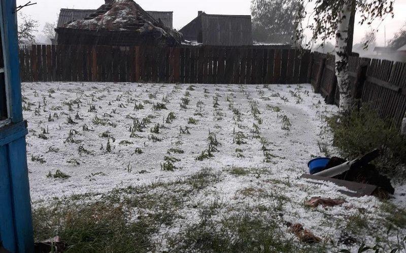 В брянском селе град погубил урожай