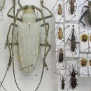 Украинец пытался тайно провезти через Брянск более 700 засушенных жуков ибабочек