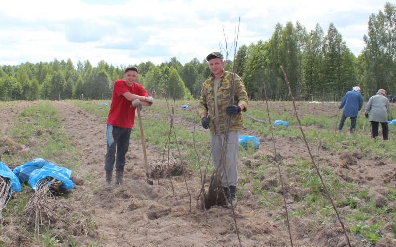В Брянской области наладят выращивание яблок в промышленном масштабе