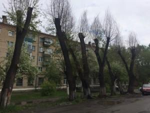 Варварская обрезка деревьев в Челябинске повлекла ущерб на 85 тысяч рублей