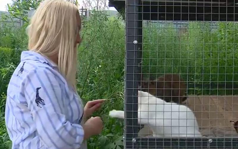 Брянский приют для животных попросил о помощи
