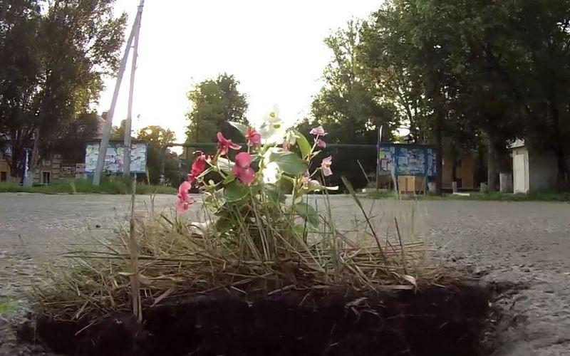 В ямы на дорогах брянцы посадили цветы