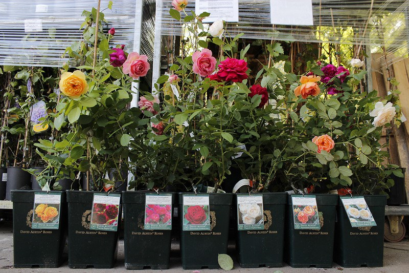 Тысячу роз не пустили через Брянск
