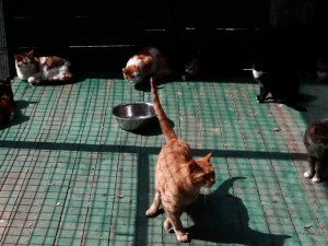Кот стал фигурантом уголовного дела