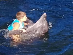 «Убитые дороги», живые дельфины и пеликаны. Крымские встречи