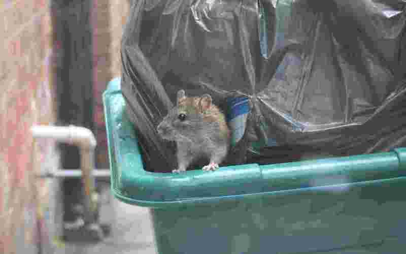 Крысы захватили белобережское бомбоубежище