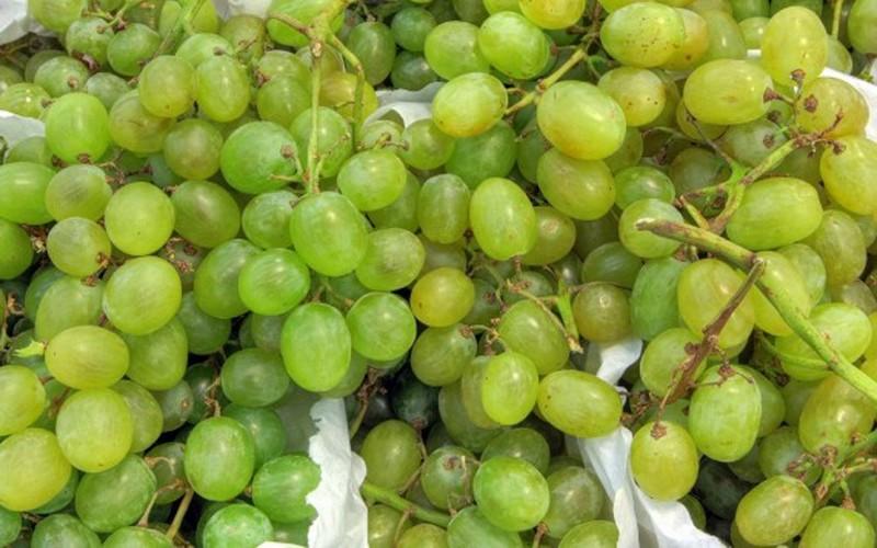 В Брянской области забраковали 20 тонн турецкого винограда