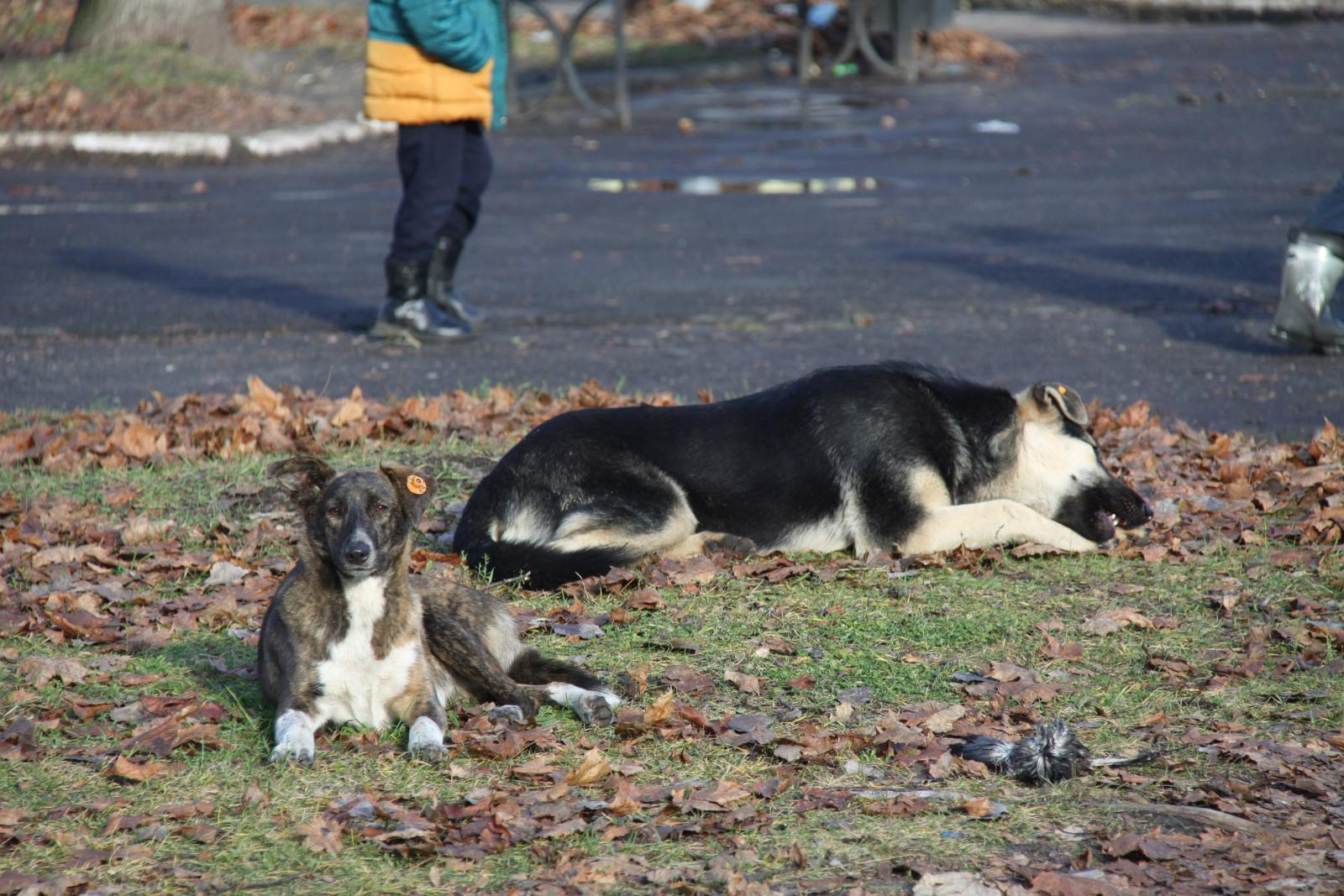Буду краток: бешеные псы