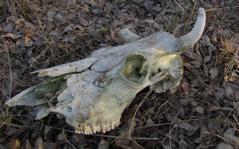 В Выгоничском районе насчитали 12 ничейных скотомогильников