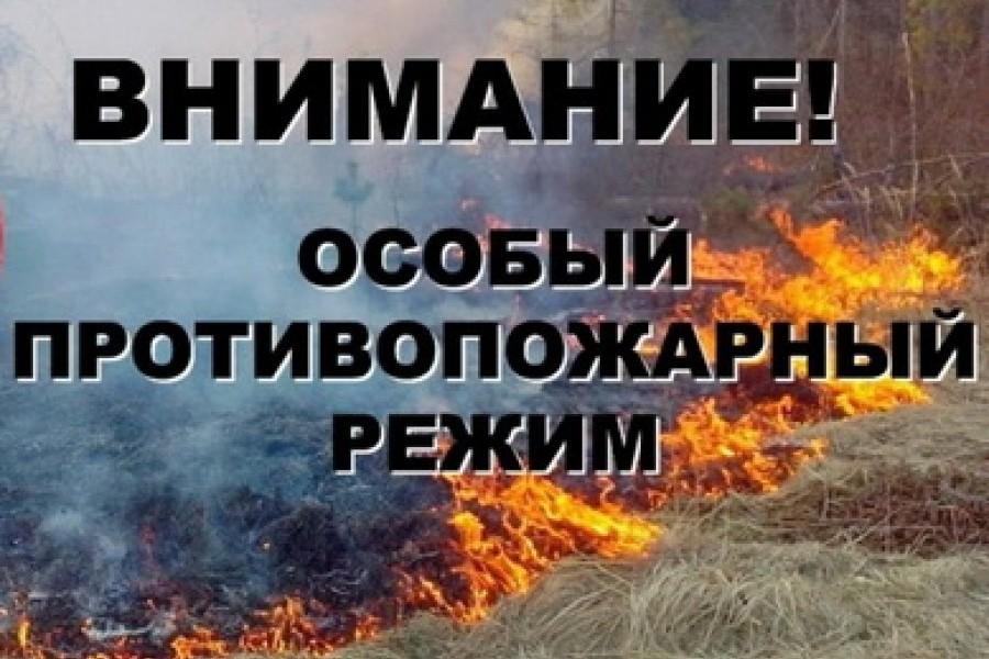 В Брянской области ожидается повышенная пожароопасность