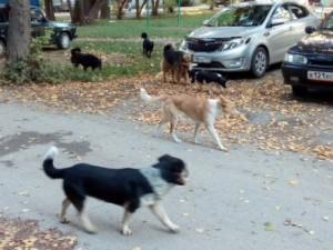 Стая собак нападает на детей в Челябинской области