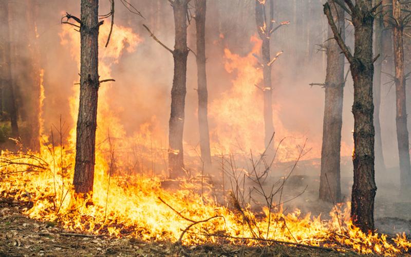 С лесным пожаром под Суземкой боролись два часа