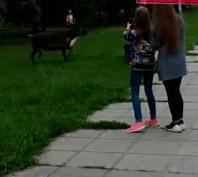 Олень бегал по Челябинску