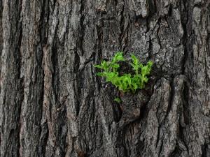 Челябинцев приглашают посадить лес в окрестностях Кременкуля