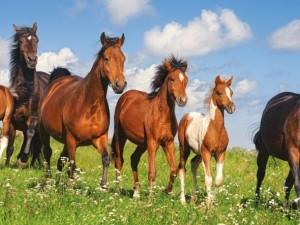 Украл табун лошадей