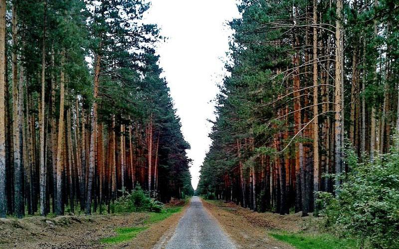 Брянцы вышли навойну свредителями леса