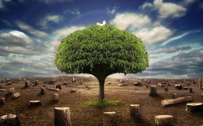 На Брянщине сократилась незаконная вырубка леса